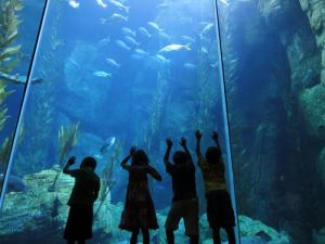 aquariumpacific Giveaway: Tickets to The Aquarium of the Pacific