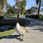 Bikes and Birds at Tewinkle Park in Costa Mesa