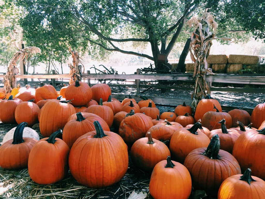 Fall Fun At The Irvine Park Pumpkin Patch Oc Mom Blog