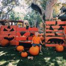 Fall Fun at the Irvine Park Pumpkin Patch