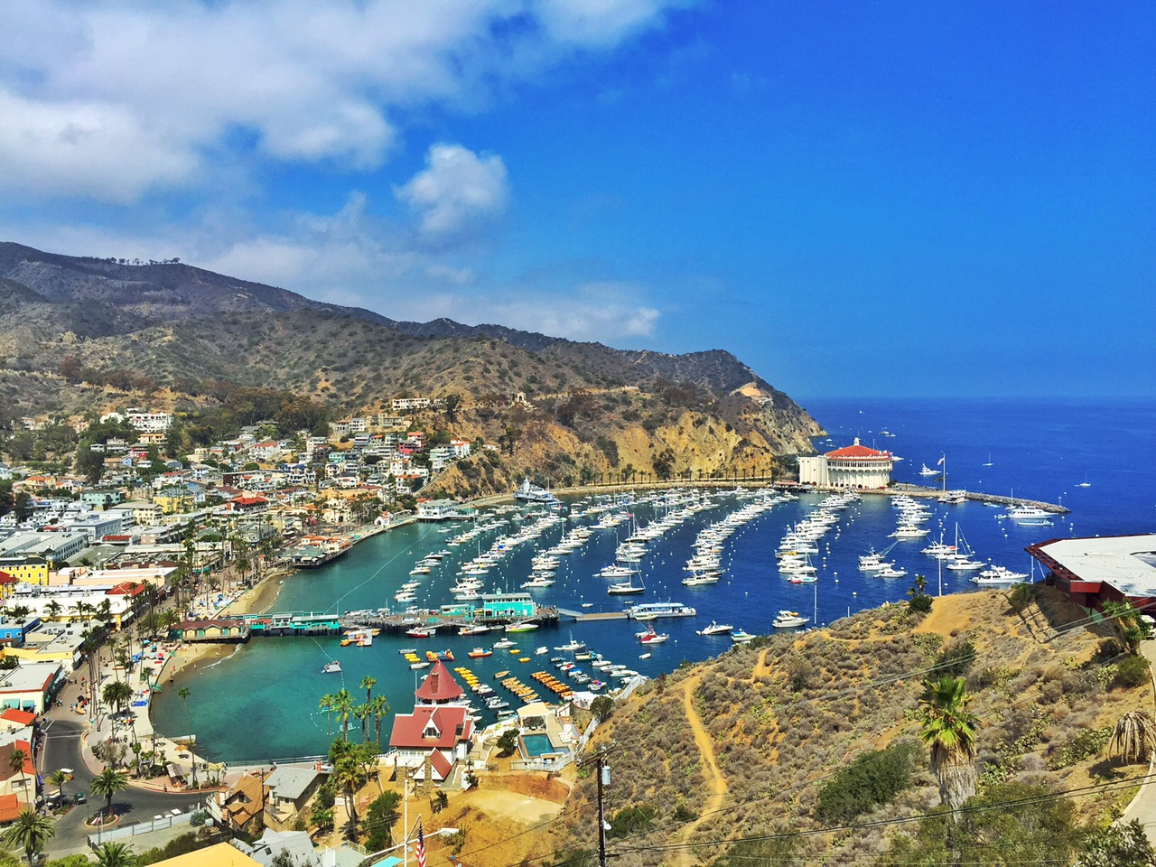 Guide to seeing catalina island in a day oc mom blog for Catalina island fishing charters